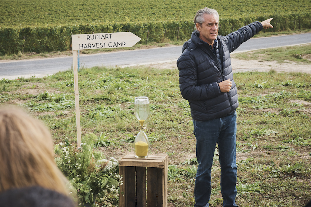 Ruinart Champagne Harvest Camp Reims Frederic Dufour