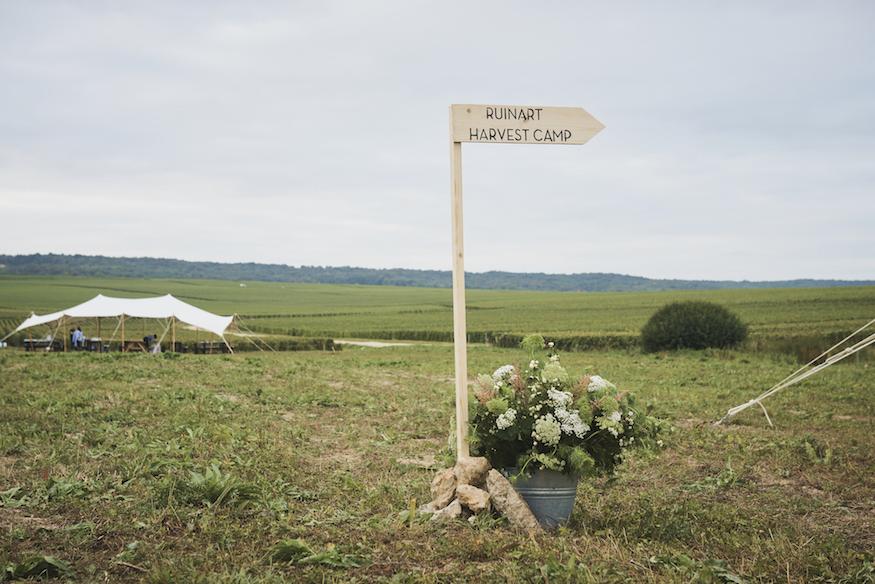 Ruinart Champagne Harvest Camp Reims