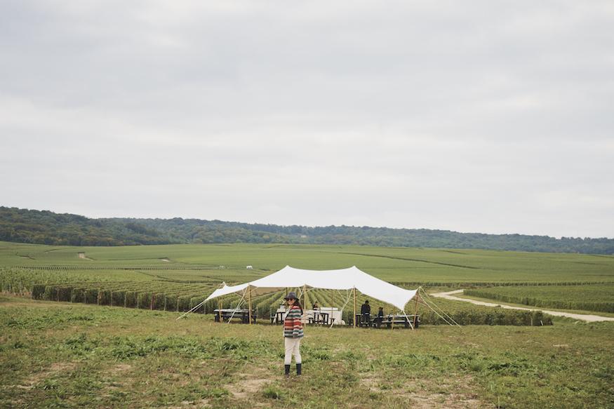 Ruinart Champagne Harvest Camp Vineyards