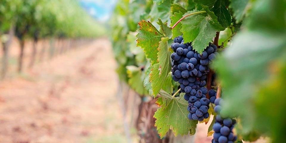 Wandering Grace Rosé Wine Spain Marbella Grenache Grape