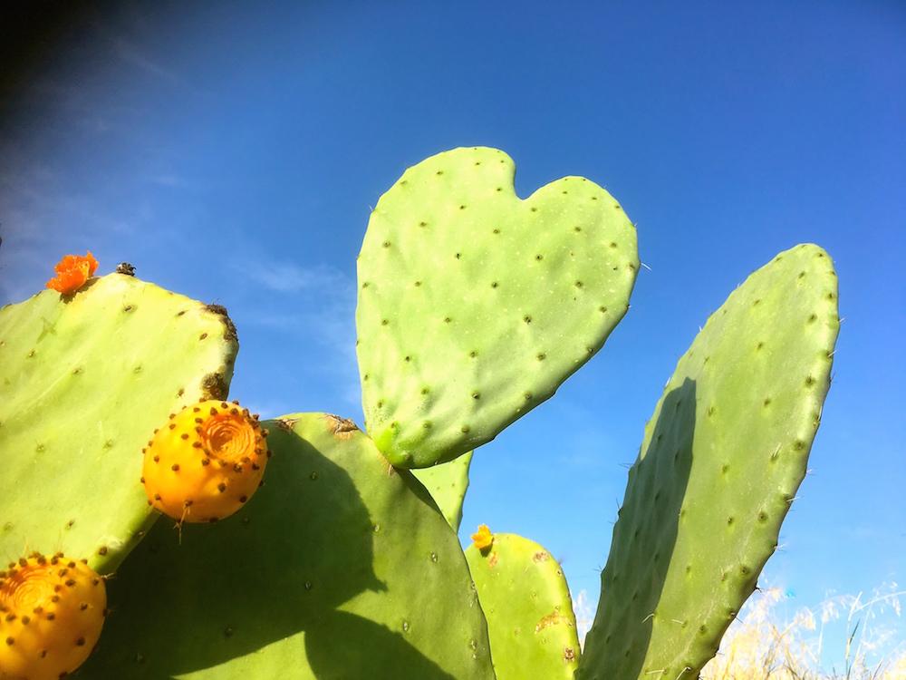 LAW Gin Ibiza Botanicals Prickly Pear
