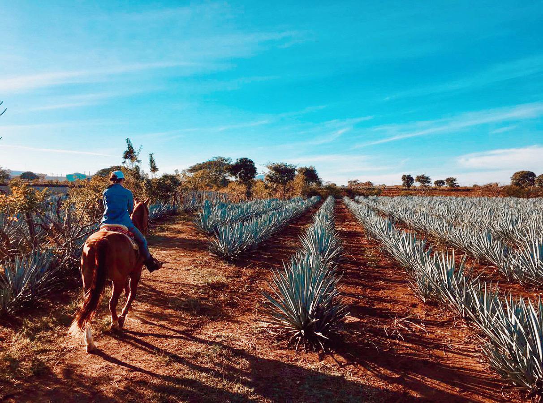 Codigo 1530 Tequila Mexico Jalisco Agave Blue Weber