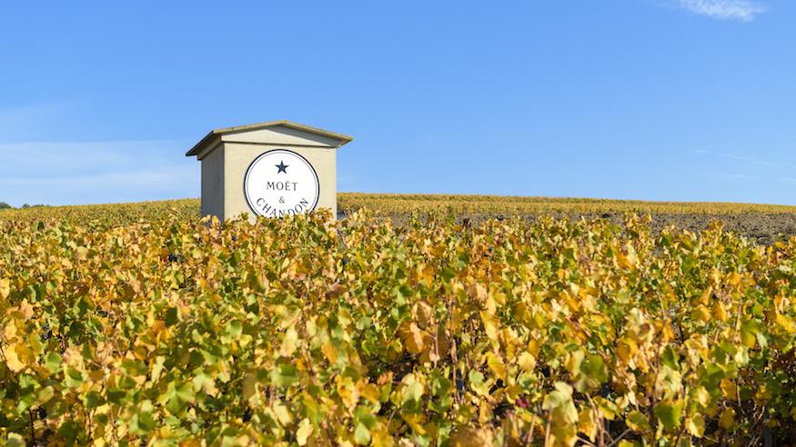 Moët & Chandon Pinot Noir vineyards at Ay, France Champagne